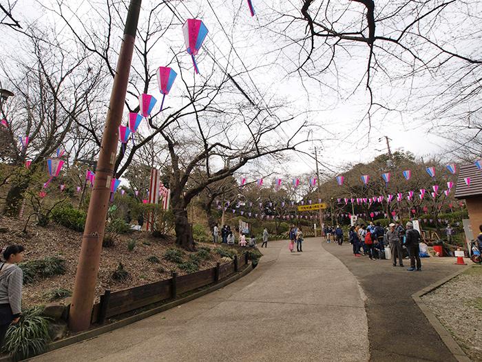 さくら祭のぼんぼりが華やかな衣笠山