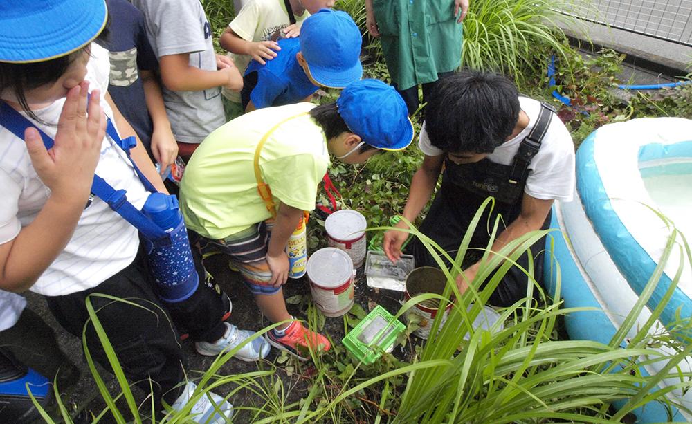 平作川で「外来種生物を学ぶ教室」