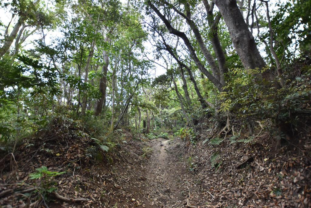 衣笠山の山道