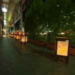 グリーンカーテンと灯籠